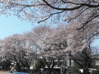 東京電機大学短期大学